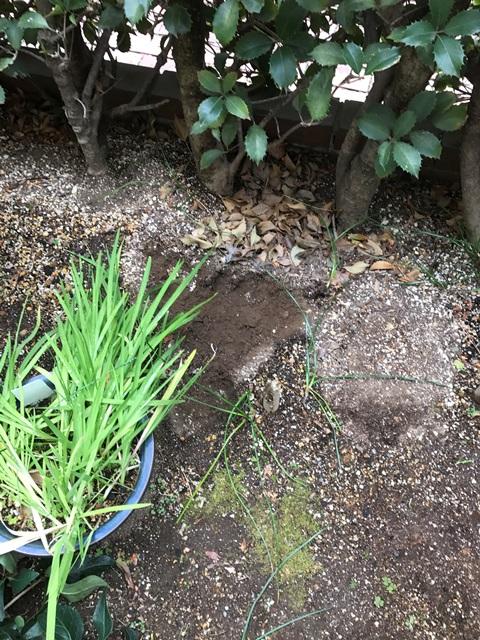 庭石 - 庭石や灯篭の解体処分の作業後2