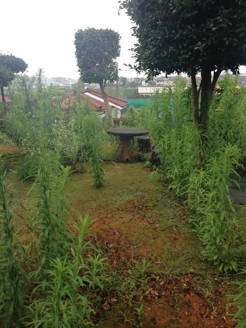 植木・庭木の剪定と伐採、草むしり作業03 作業前