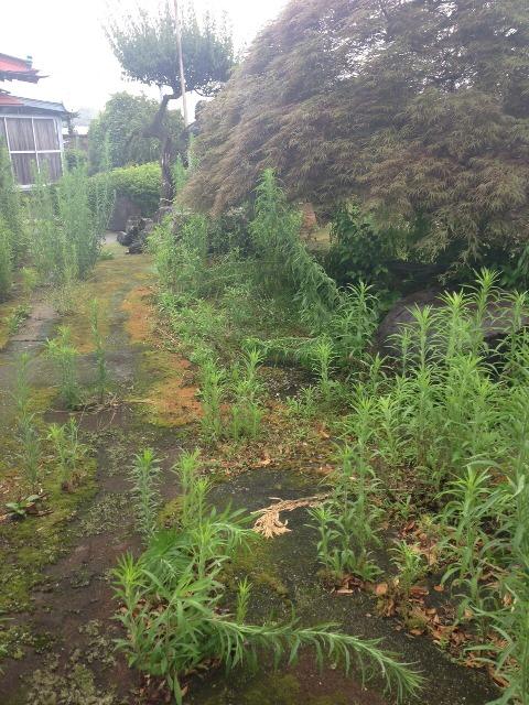 植木・庭木の剪定と伐採、草むしり作業05 作業前
