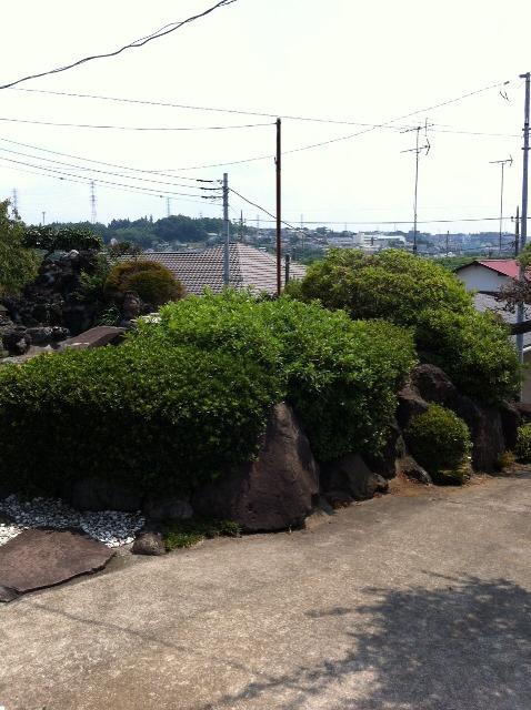 植木・庭木の剪定と伐採、草むしり作業07 作業前