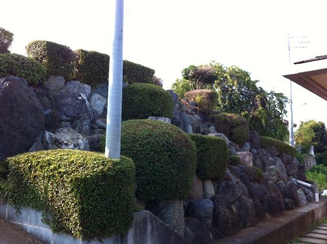 植木・庭木の剪定と伐採、草むしり作業10 作業後