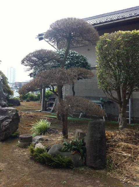 植木・庭木の剪定と伐採、草むしり作業 伐採作業前