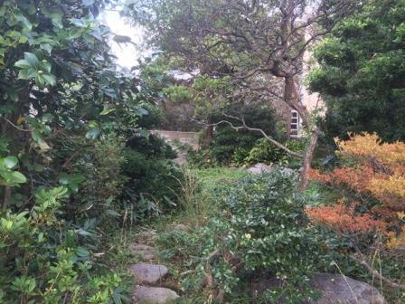 神奈川県逗子市桜山 - 庭木・植木・庭石の解体撤去と処分工事(お庭のリフォーム)のビフォー写真05