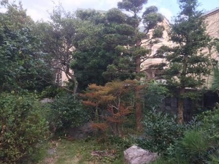神奈川県逗子市桜山 - 庭木・植木・庭石の解体撤去と処分工事(お庭のリフォーム)のビフォー写真06