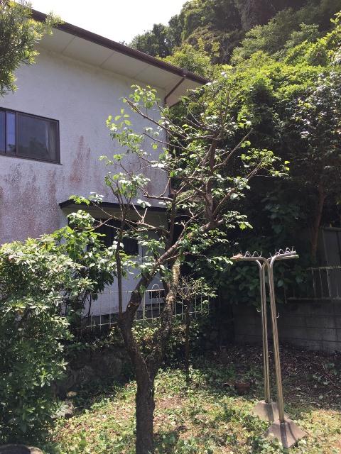 神奈川県鎌倉市雪ノ下-庭木・植木の剪定の作業完了04