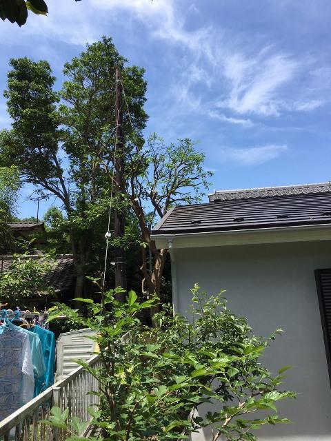 神奈川県鎌倉市雪ノ下-庭木・植木の剪定の作業完了05