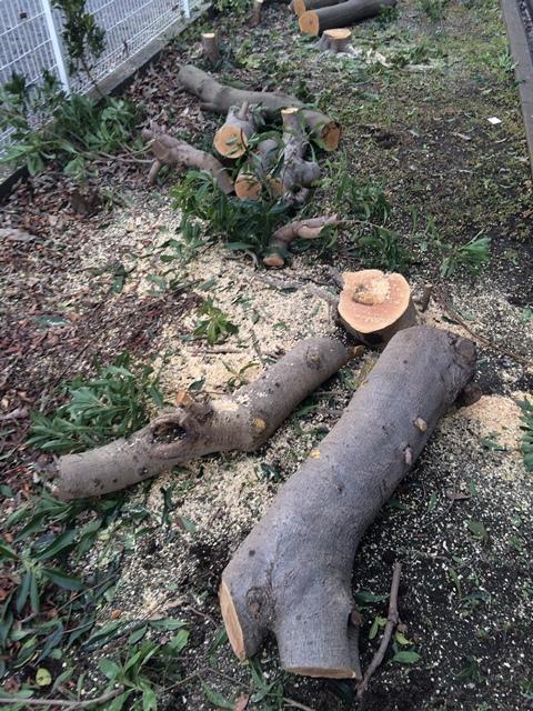 伐採 - 高木の伐採途中の風景