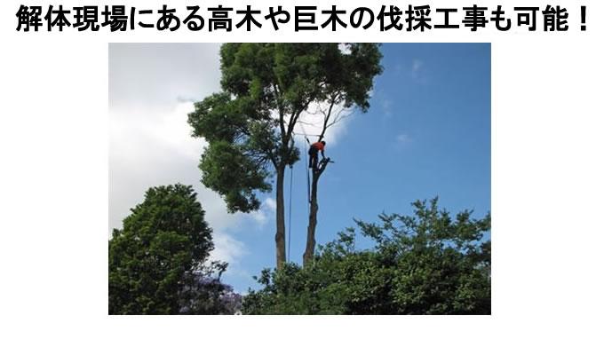 高木・支障木の伐採風景