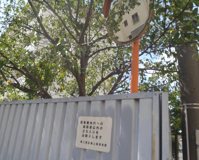 伐採 - 桜の木 伐採前のビフォー