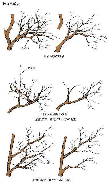 剪定 - 枝抜き剪定の説明