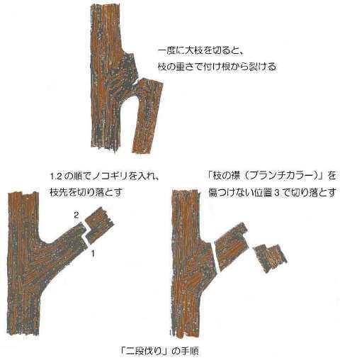 剪定 - 二段伐りの手順説明