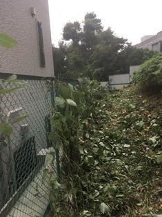 蔦(ツタ)の撤去と草刈りの作業写真
