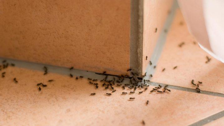 駆除 室内 蟻